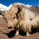 Don't Dress Like a Yak when Speaking in Public